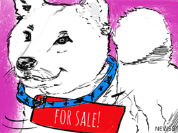 Dogecoin Price Technical Analysis for 02/12/2015 - Selling Rallies?