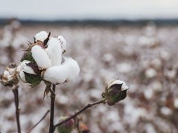 Commonwealth Bank, Wells Fargo Test Blockchain for Cotton Trade